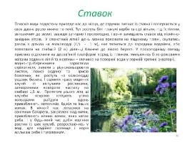 Image00036